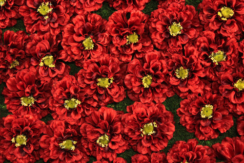 Red Marigold Flower Panels and Walls