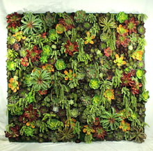 Load image into Gallery viewer, Succulent Wall