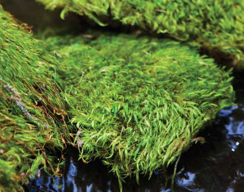 Mood Moss Preserved (Bulk Box) - Fresh Green