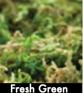 Mountain Moss Preserved (Bulk Box) - Fresh Green