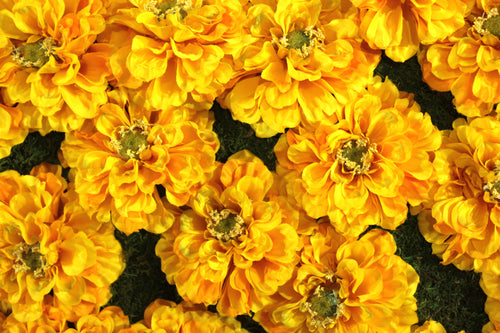 Yellow Impatiens Flower Panels or Walls