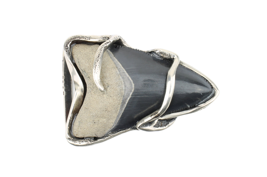 Sterling Silver Fossil Megalodon Shark Tooth Buckle 40mm