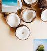 Wild - Coconut Dream Scent