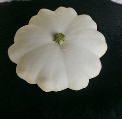 Early White Bush Scallop Squash