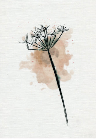 Cowparsley Stem Giclee Art Print