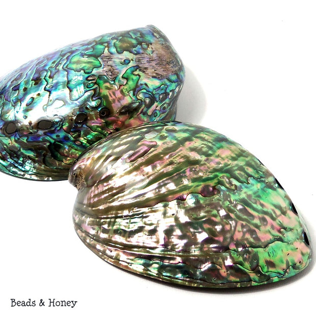 Whole Abalone Shell Polished 4-5in (1pc)
