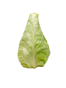 Conehead Cabbage