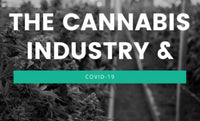 COVID-19 and Cannabis 2020