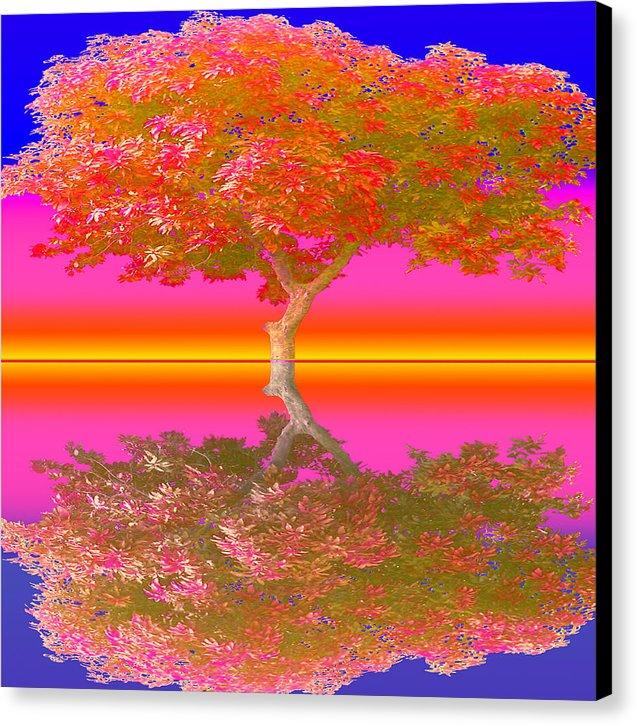 Sunset Tree - Canvas Print