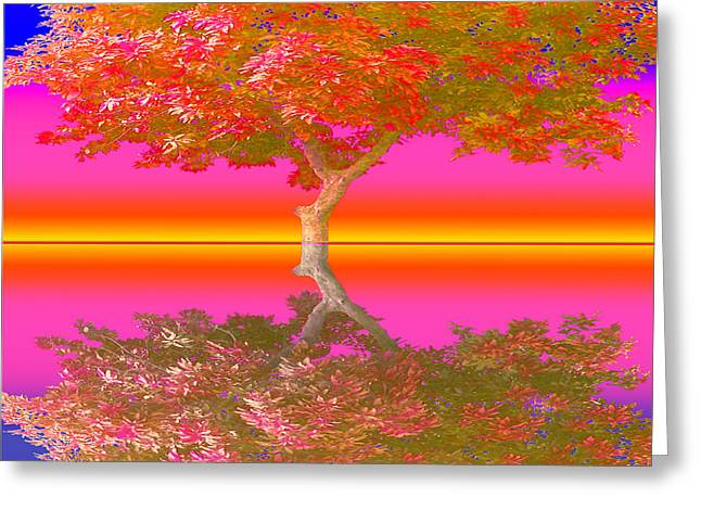 Sunset Tree - Greeting Card
