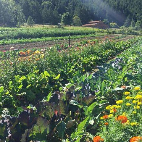 3/18 Biodynamic Planting Workshop