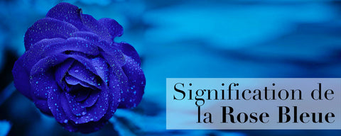 Signification de la rose bleue