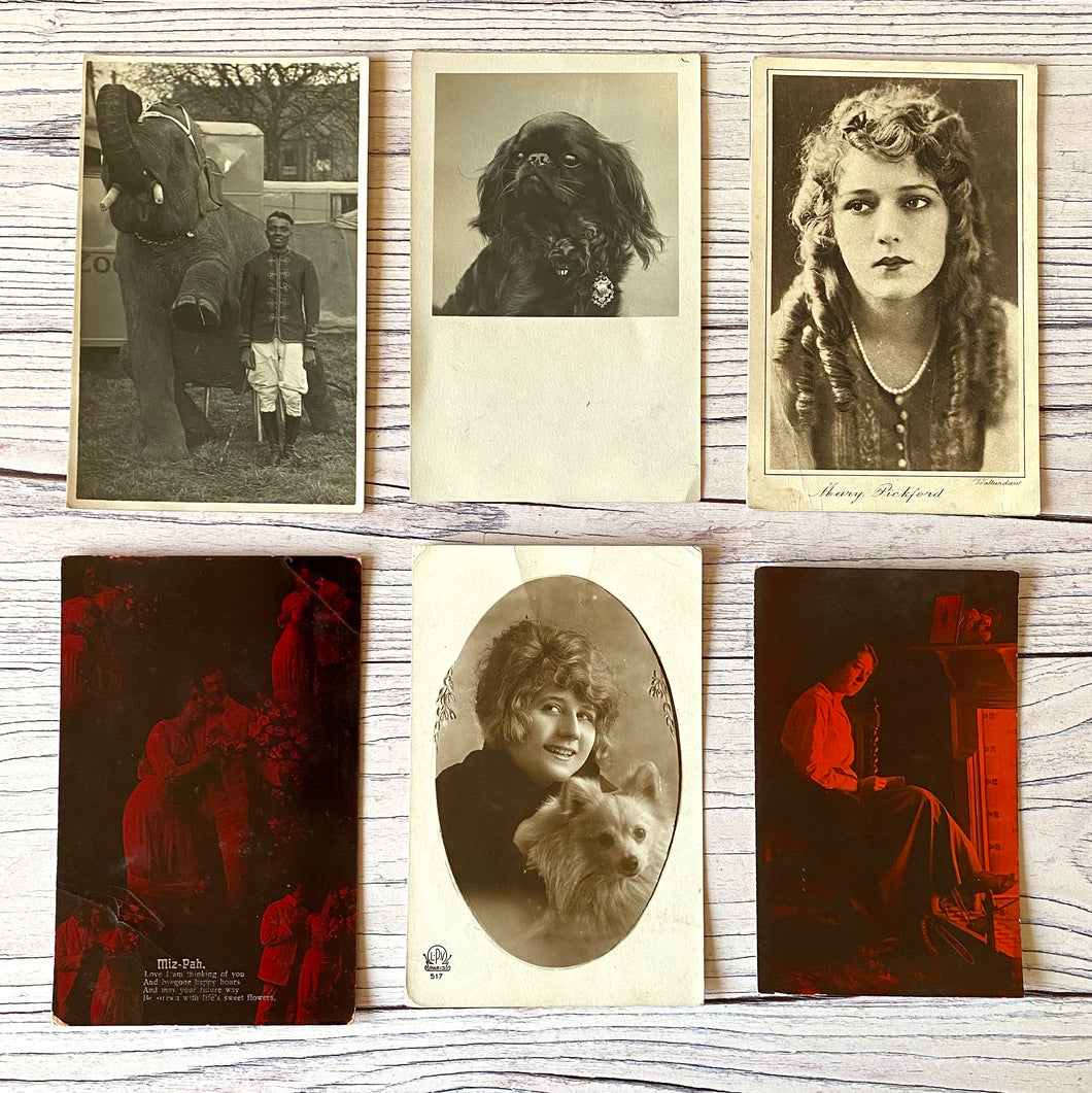 Postcards (vintage unused x 7) Mary Pickford, Valentine, portraits, dog, elephant, (early 20th century)