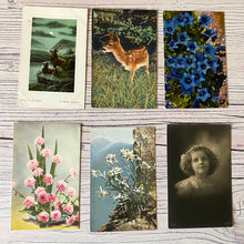 Load image into Gallery viewer, Postcards (vintage unused x 6) flowers, deer, portrait (early 20th century)