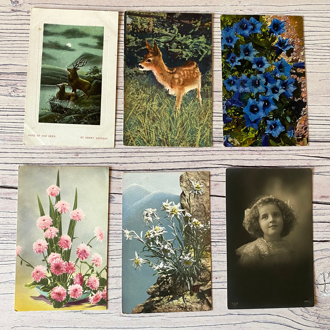 Postcards (vintage unused x 6) flowers, deer, portrait (early 20th century)