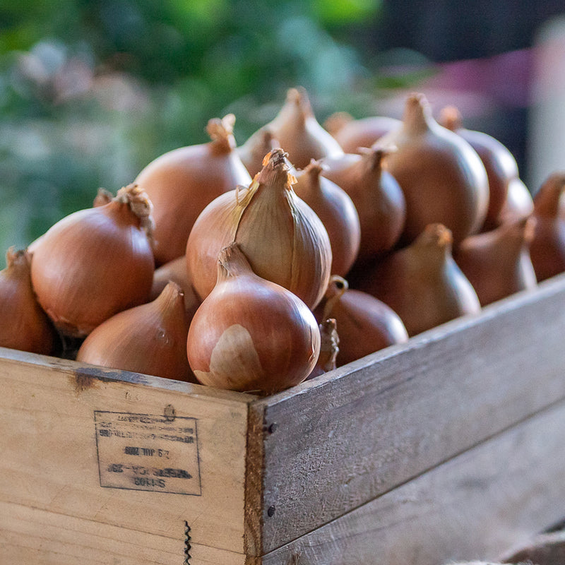 Onions Brown ($4.99 p/kg)