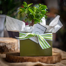 Bonsai Gift Set