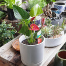 Indoor plant gift sets 2