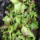 Organic mixed salad mix
