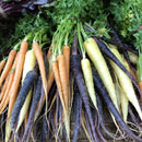 Heritage Dutch Carrots