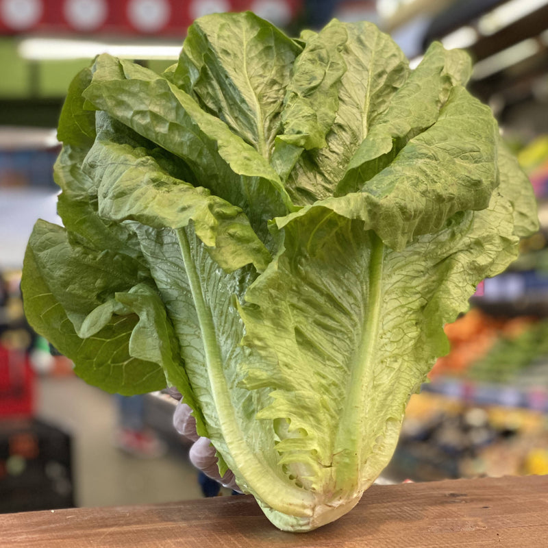 Large Cos Lettuce