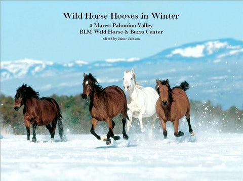 Wild Horse Hooves in Winter (DVD)