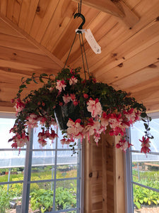 Fuchsia Red & White Hanging Basket