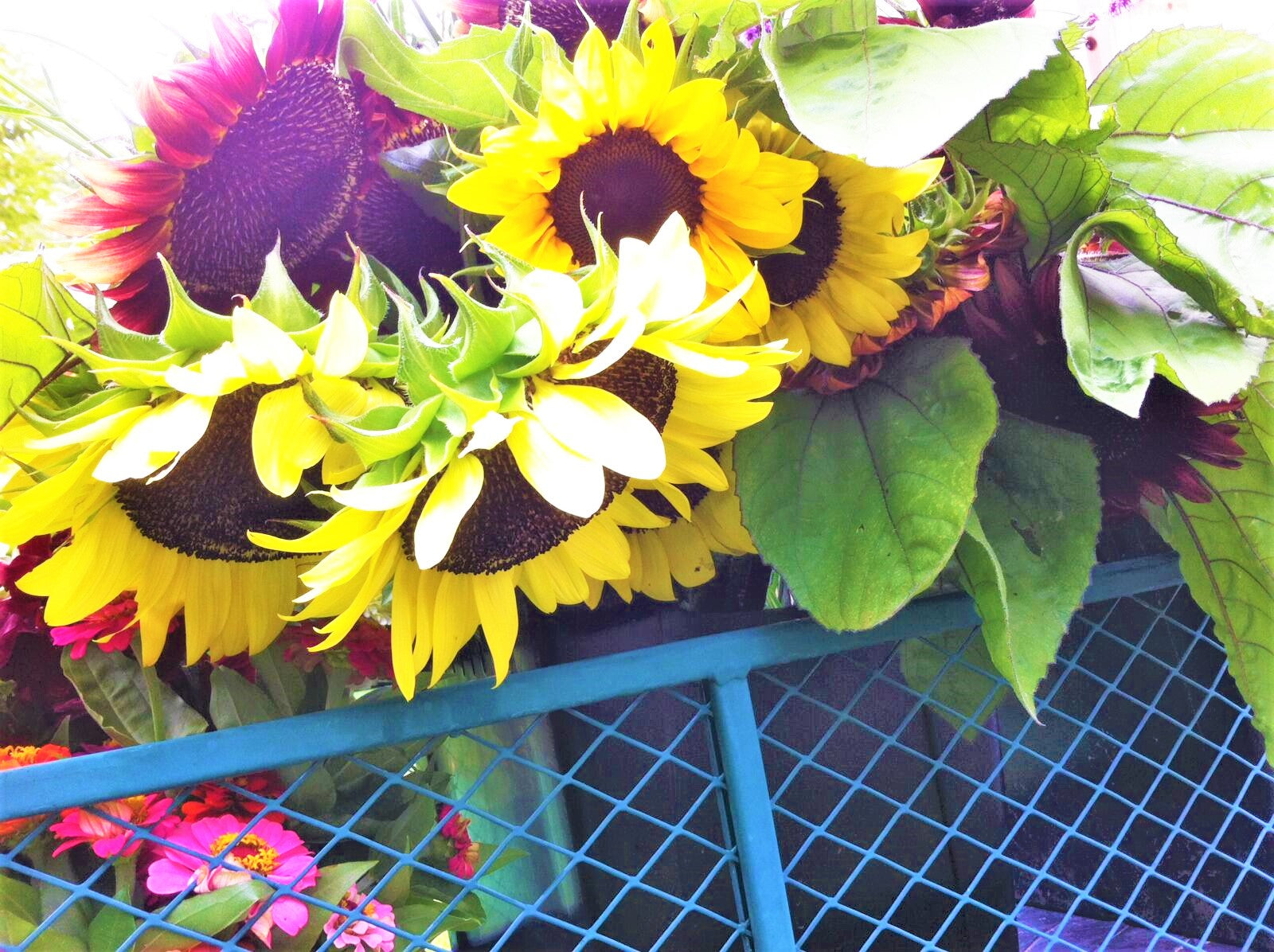 Late Summer Cut Flower CSA