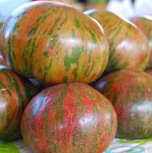 Tomato 'Berkeley Tie-Dye Green'