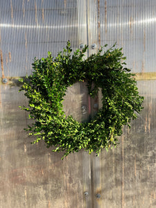 Boxwood Wreath 12""