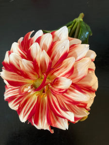 Dahlia Red and White A15
