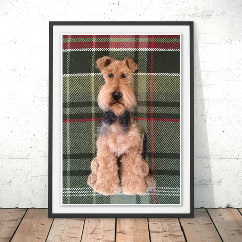 Airedale Terrier Original Print by Sharon Salt