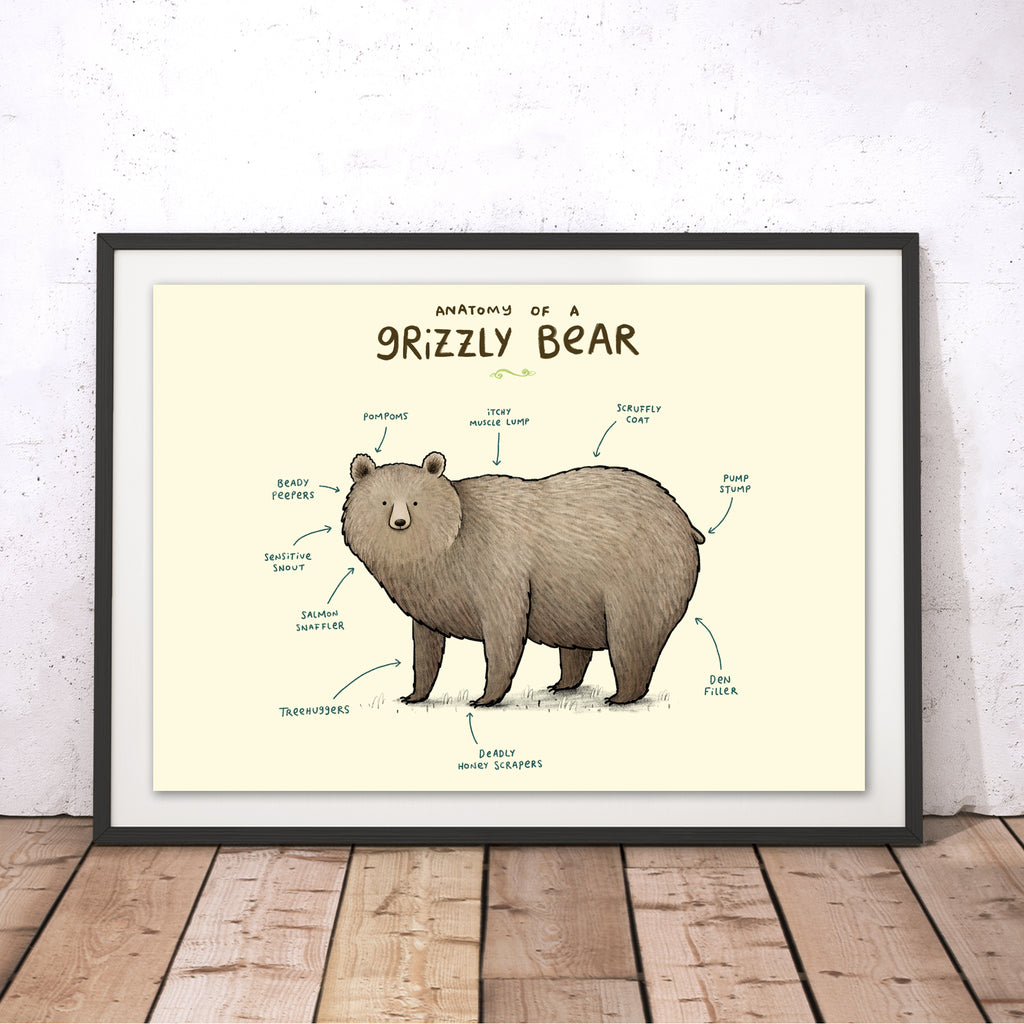 Anatomy of a Grizzly Bear