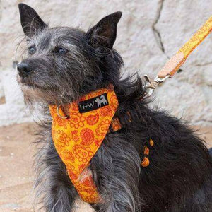 Orange Paisly Bandana - Holler Brighton