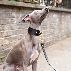 Black - Leather Sighthound Collar - Holler Brighton