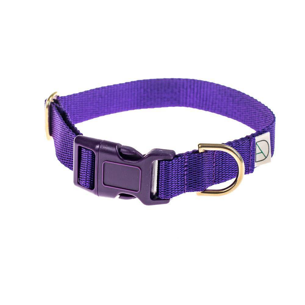 Purple - Polly Webbing & Brass Collar - Holler Brighton