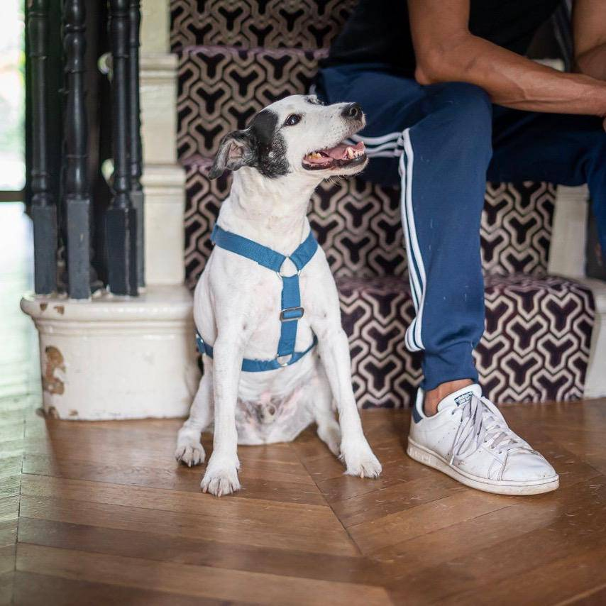 Blue - Cotton Harness + Marine Grade Steel Buckle - [Holler Brighton]