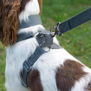 Grey Cotton Harness + Marine Grade Steel Hardware - Holler Brighton