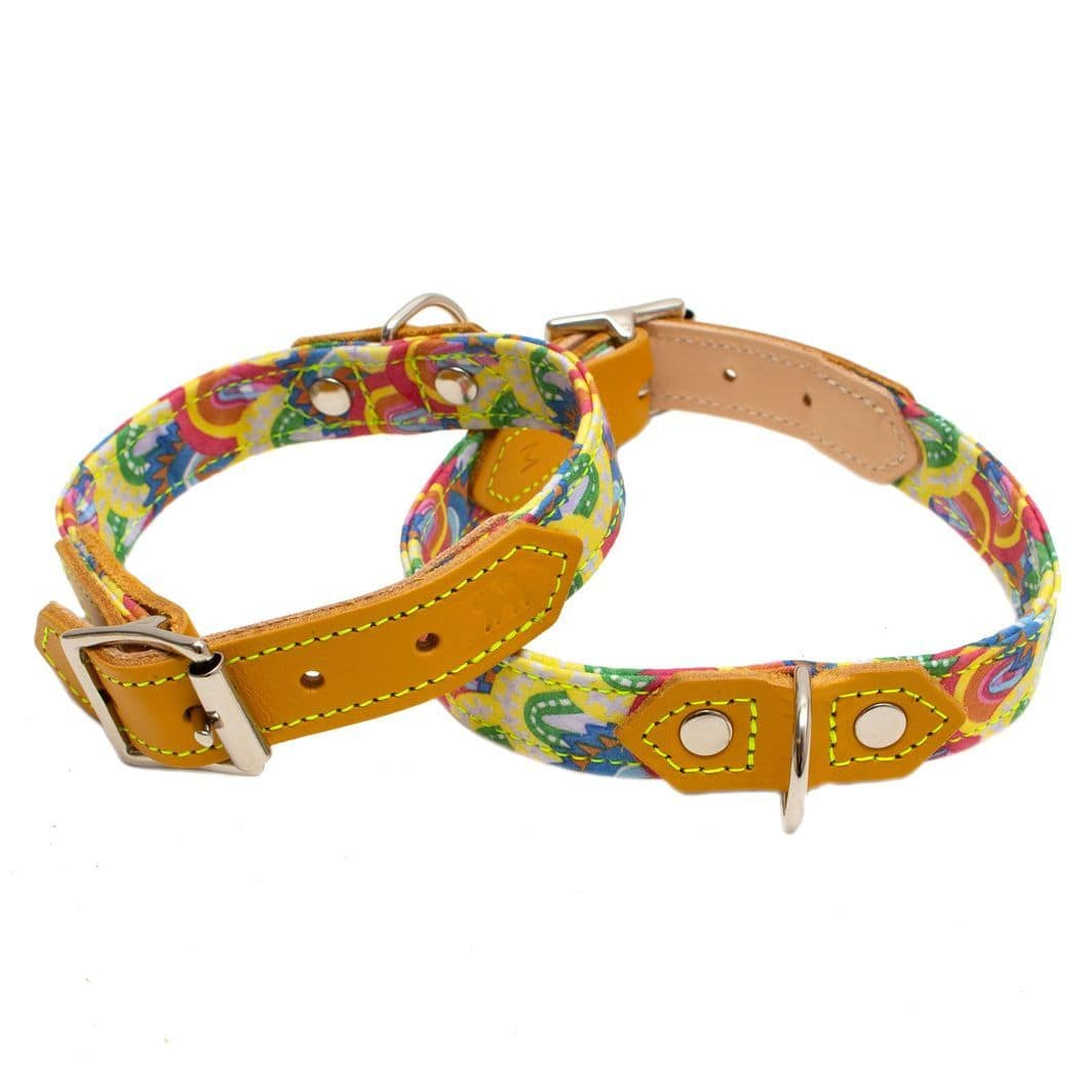 Over the Rainbow Dog Collar - Holler Brighton
