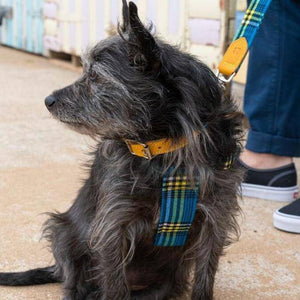 Shuka Blue & Yellow Tartan - Harness - Holler Brighton