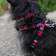 Inca Pink Harness - [Holler Brighton]
