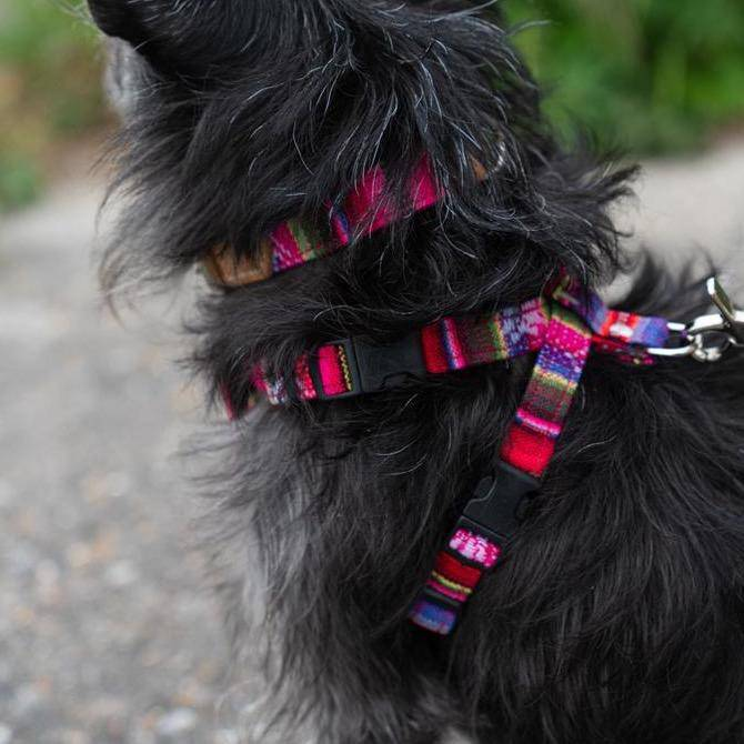 Inca Pink Harness - Holler Brighton