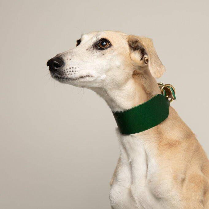 Forest Green - Leather Sighthound Collar - Holler Brighton