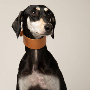 Natural Tan - Leather Sighthound Collar - Holler Brighton