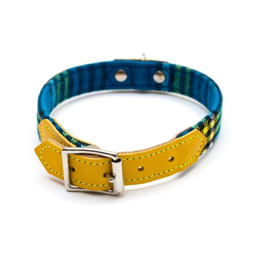 Shuka Blue & Yellow Tartan - Collar - Holler Brighton