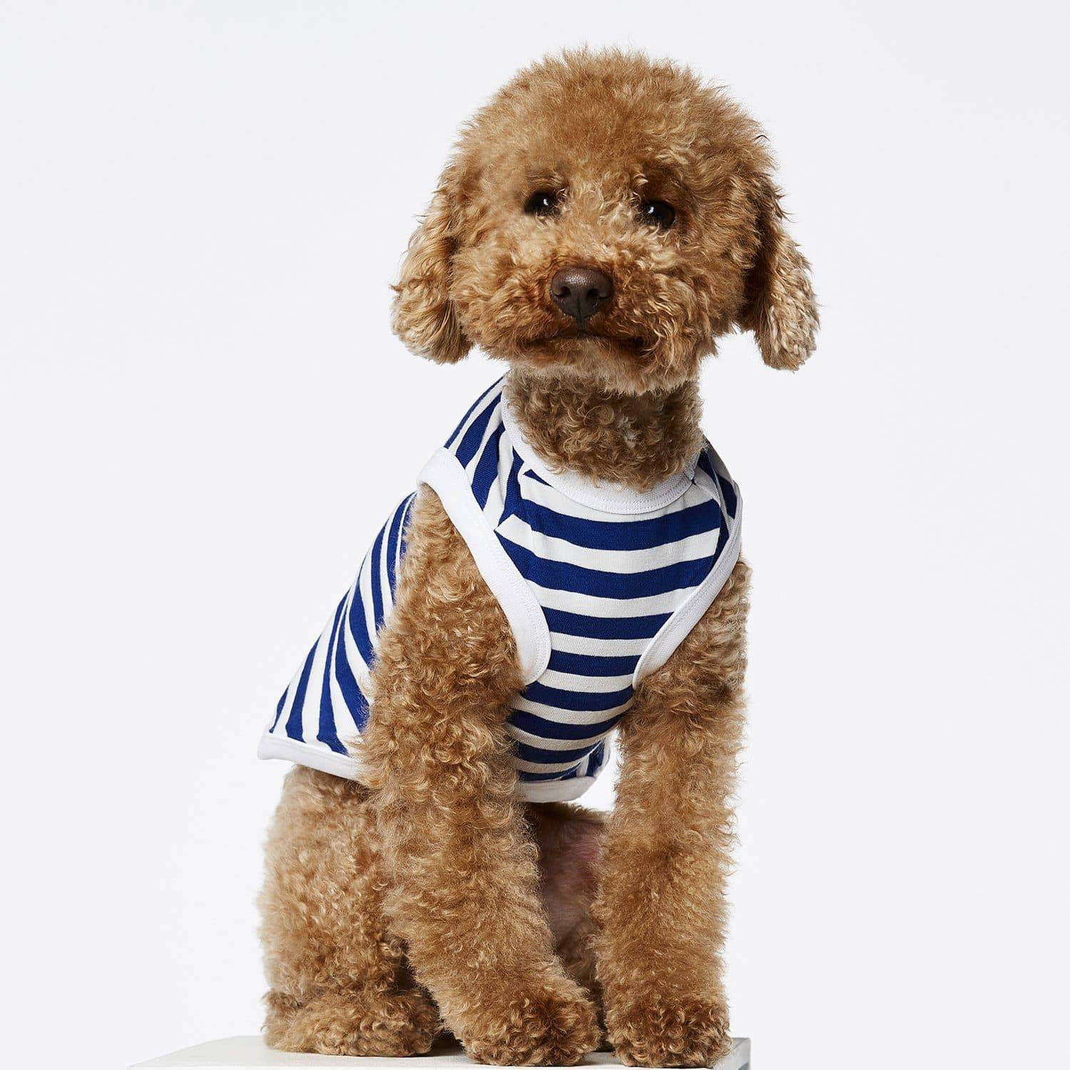 Navy & White - Striped T-Shirt - Holler Brighton