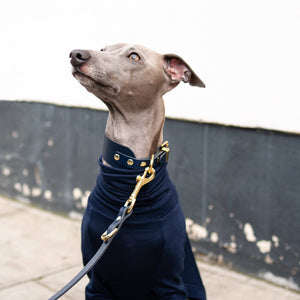 Navy - Leather Sighthound Collar - Holler Brighton