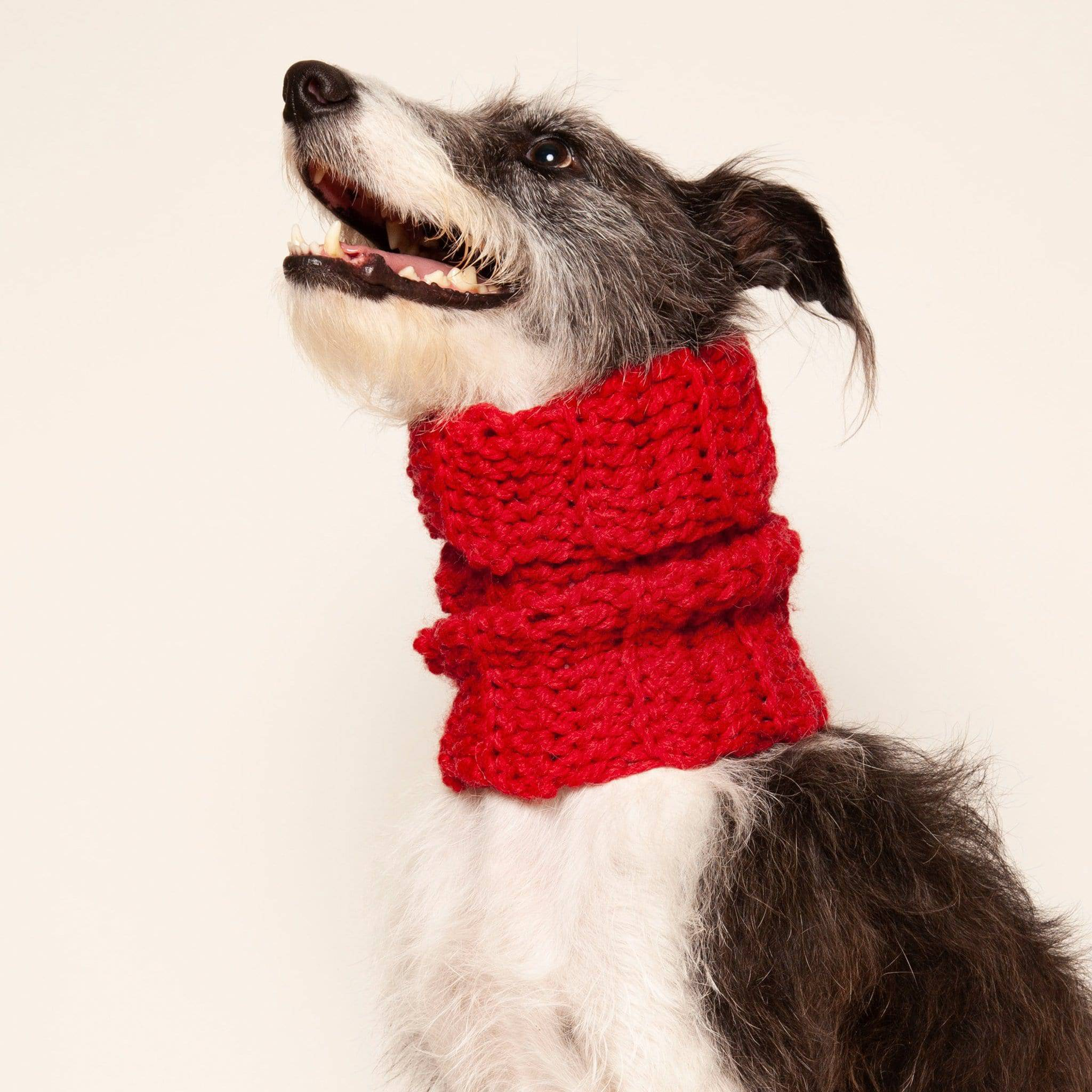 Wolf & Wool - Medium Dog Snood - [Holler Brighton]