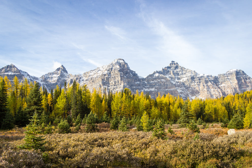 Valley of the Ten Peaks, fall autumn colours, larches, Banff National Park