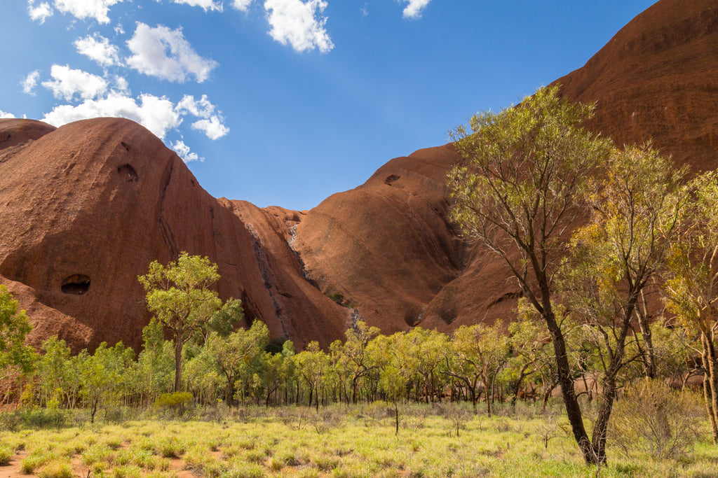 Small trees at base of Uluru (Ayer's Rock) in the Australian Outback
